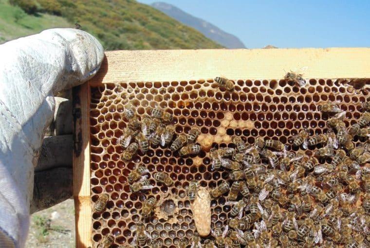 Beekeeping for Beginners - Beekeeping 101