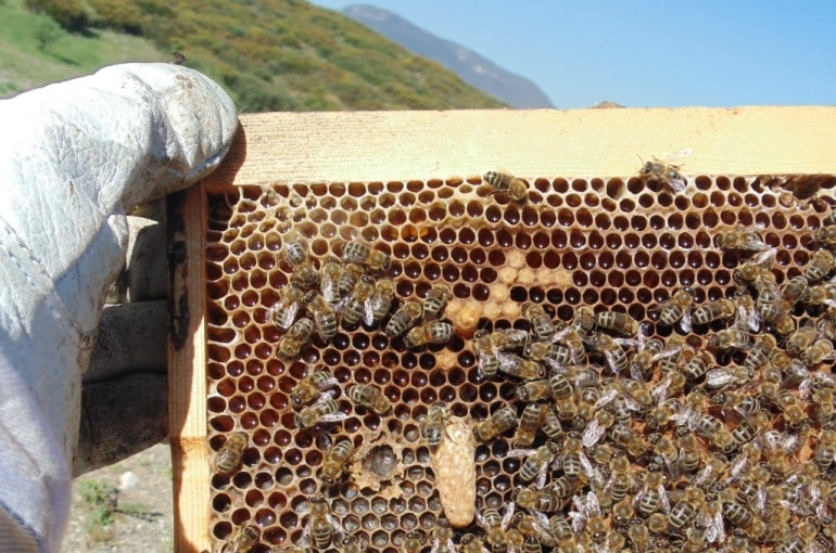 Beekeeping for Beginners - Beekeeping 101