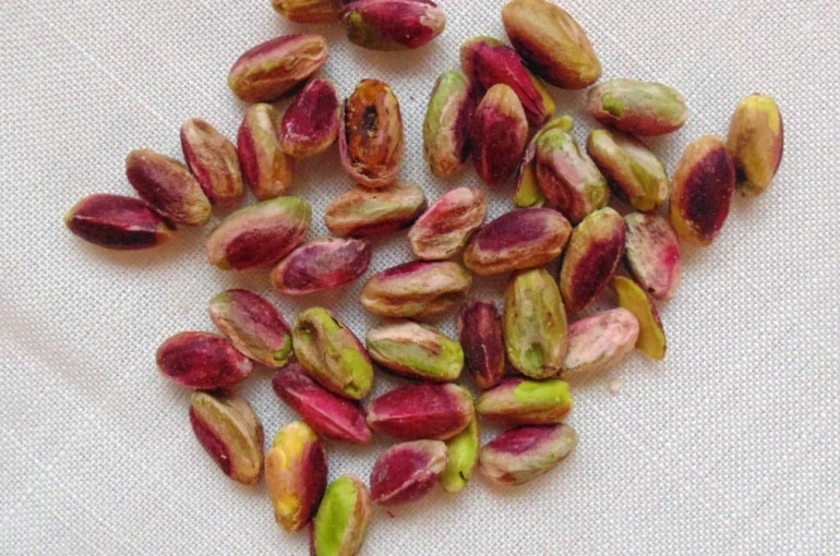 Pistahio Tree Harvest and Yield