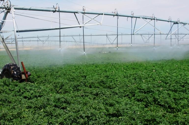 Potato Water Requirements