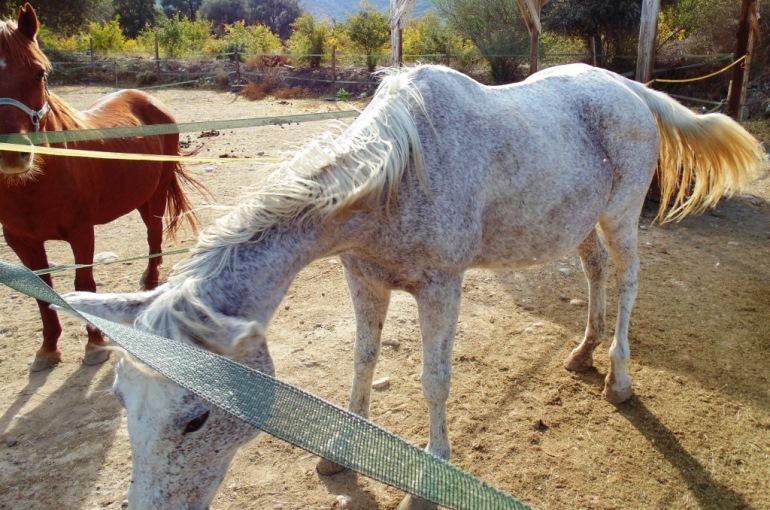 Raising Horses 101
