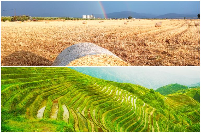 Kỹ thuật trồng trọt 1001 cách làm giàu từ nông nghiệp trồng trọt, chăn nuôi