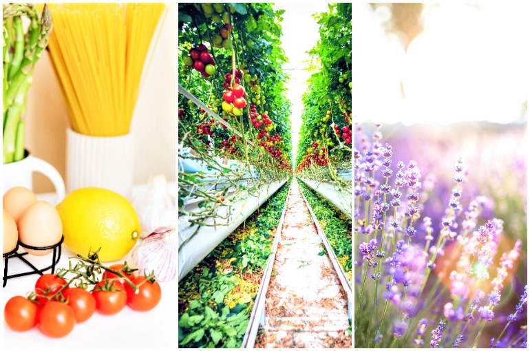 Organic Agriculture Definition - Organic Farming Examples