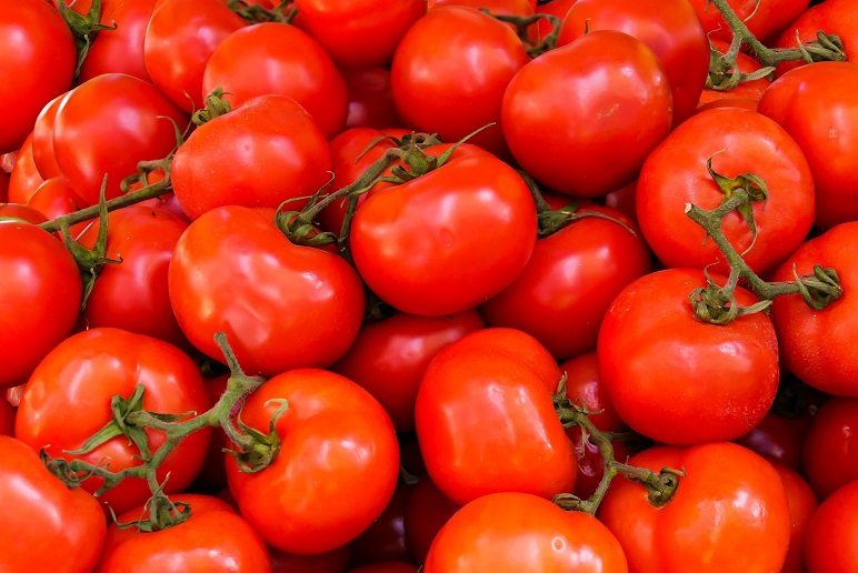 Tomato Facts and History