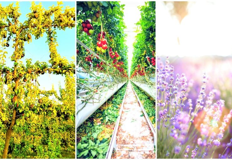 Principes de l'agriculture biologique – qu'est-ce que l'agriculture biologique
