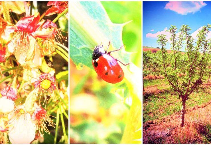 ökologische landwirtschaft vorteile - ökologische landwirtschaft vorteile nachteile