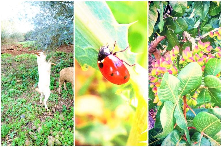 o que e agricultura orgânica brainly - agricultura orgânica resumo