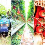 agricultura orgánica vs agricultura convencional